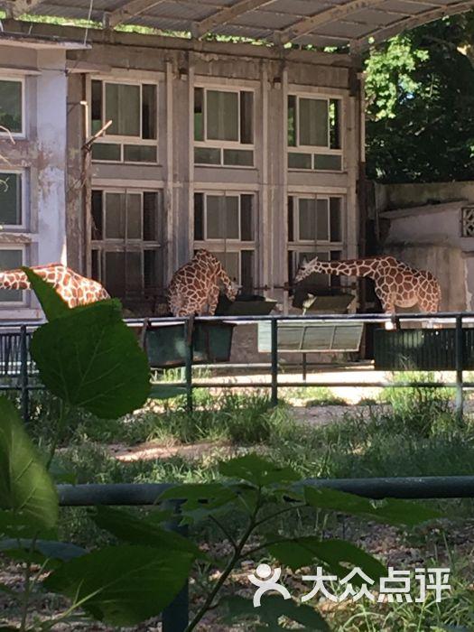 上海动物园图片 - 第3张