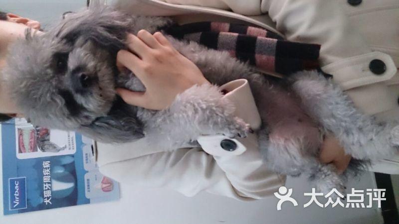 贝珍爱动物医院-图片-北京宠物-大众点评网