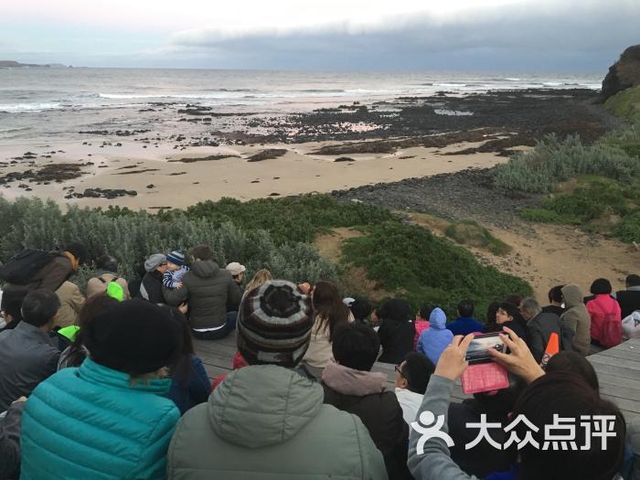 墨尔本企鹅岛图片 - 第10张