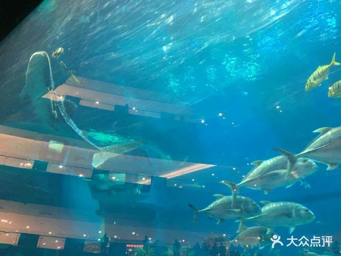 海滨城浩海立方海洋馆-图片-双流区周边游-大众点评网