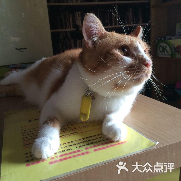 可爱小萌猫舍壁纸