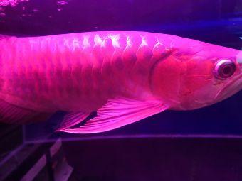 第一家水族馆