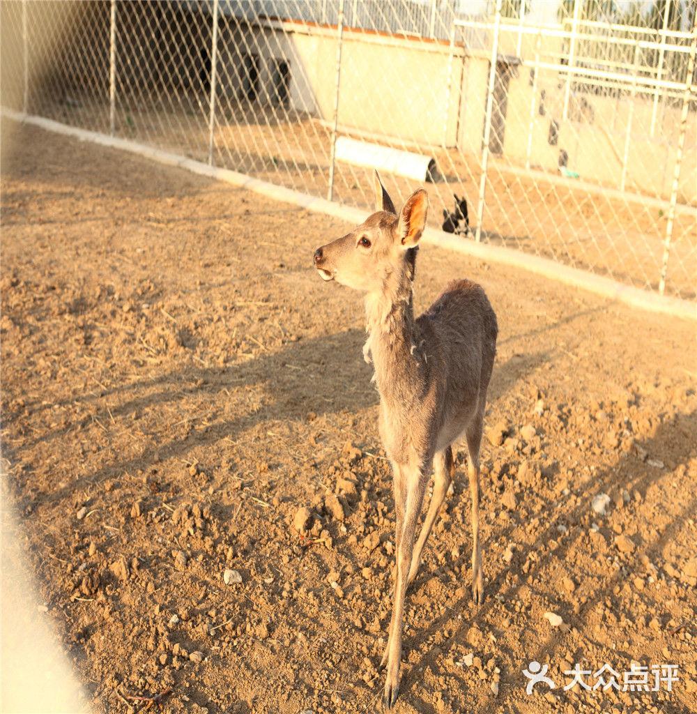 【小动物认养-亲子套餐】-新铂骊亲子马术农场(顺义)