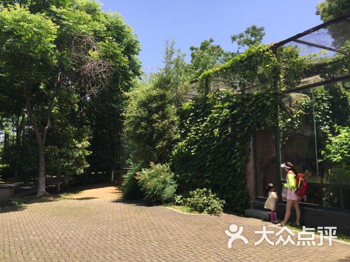 武汉动物园景点图片 - 第86张