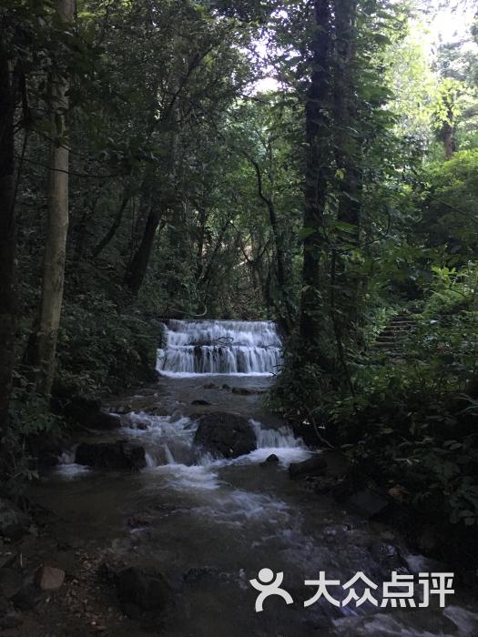 莫里热带雨林风景区-图片-瑞丽市周边游-大众点评网