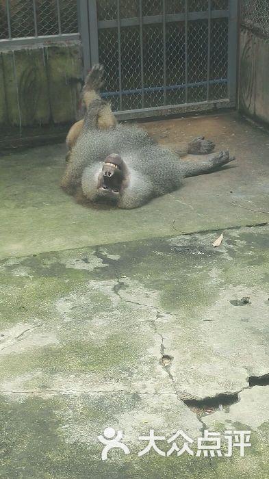东莞寮步香市动物园图片 - 第11张