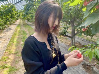 全旺大樱桃采摘园