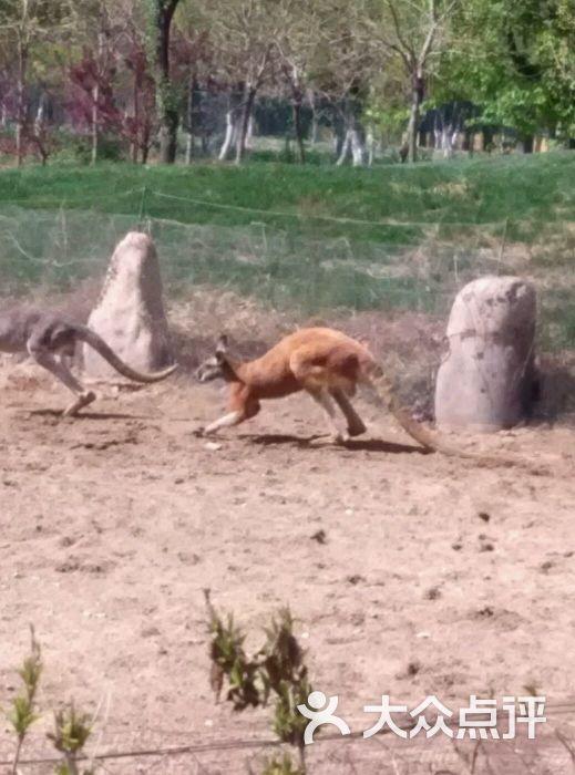 北京野生动物园图片 - 第5张