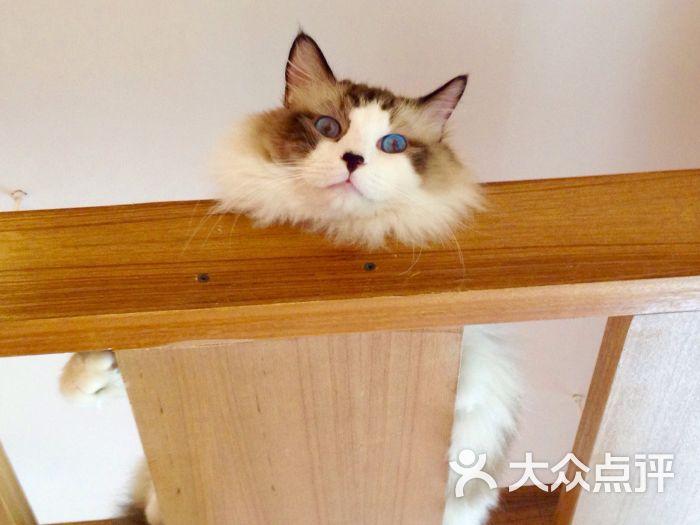 贝斯特猫咪咖啡馆图片 - 第1张