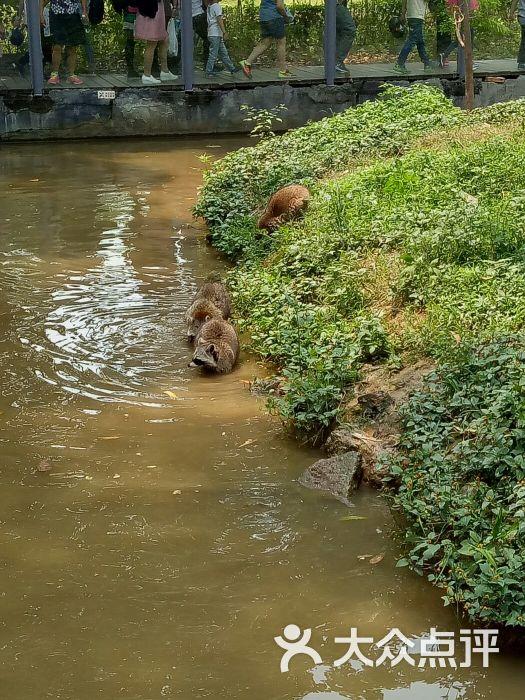 东莞寮步香市动物园图片 - 第2张