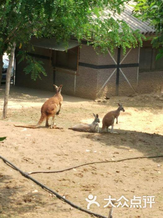 石家庄动物园图片 - 第5张