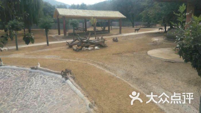 石家庄动物园图片 - 第27张