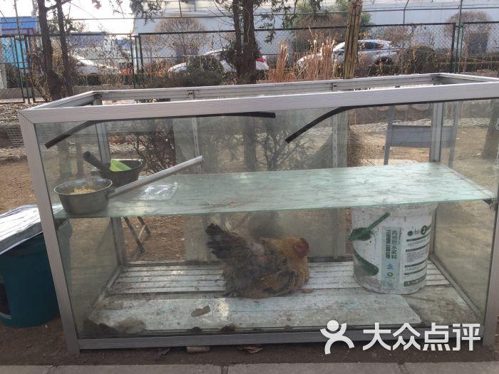 美神宫动物园图片 - 第1张