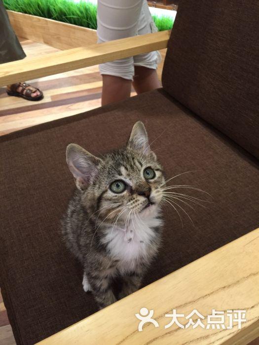 壁纸 动物 猫 猫咪 小猫 桌面 525_700 竖版 竖屏 手机