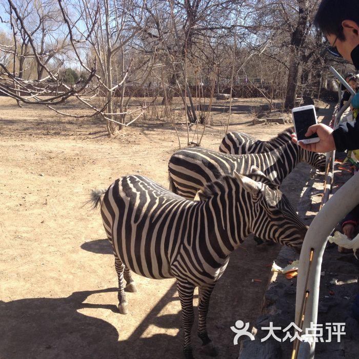 北京动物园的点评