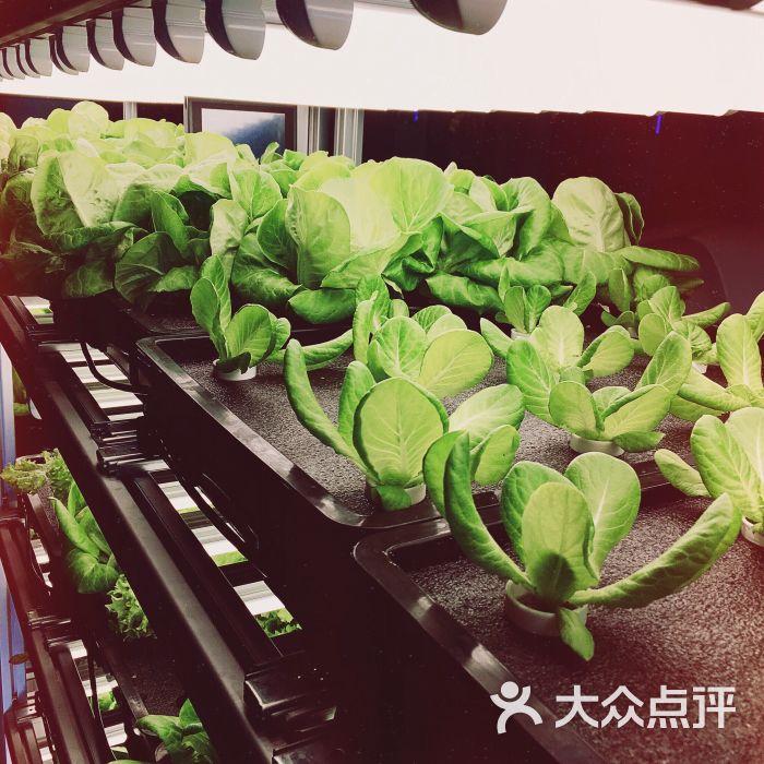 背景 壁纸 绿色 绿叶 盆景 盆栽 树叶 植物 桌面 700_700