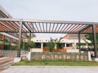 新区实验小学(珠江路分校)