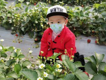 成山草莓采摘园