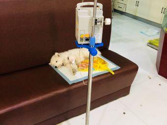 芸生动物医院