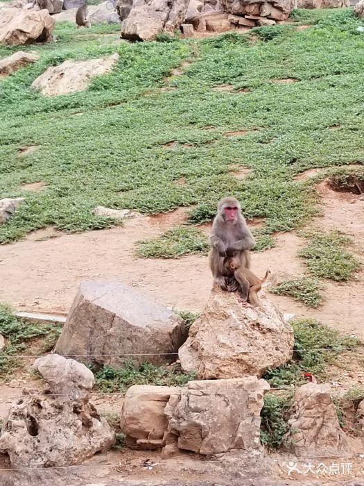 石家庄动物园图片 - 第19张