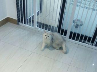 圣宠宠物(西城汇店)