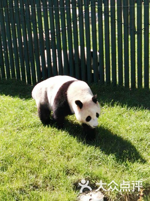 沈阳森林动物园-图片-沈阳周边游-大众点评网