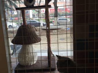 有家狗宠物店