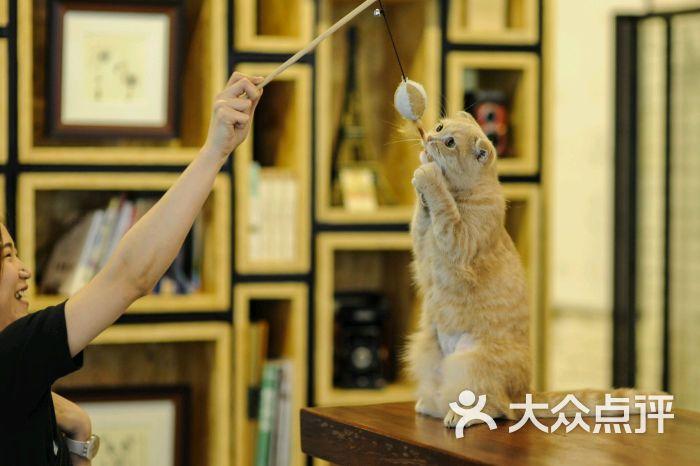 咖法森林kaffa forest-猫猫图片-广州美食-大众点评网