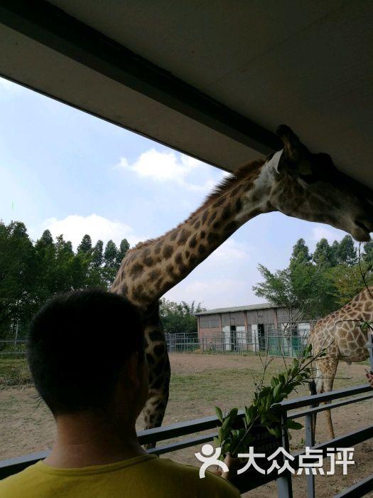 东莞寮步香市动物园图片 - 第72张