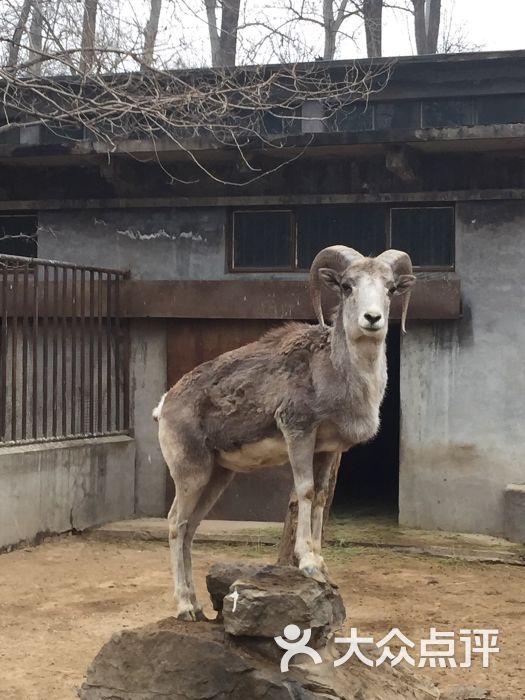 北京动物园怎么样,好不好的默认点评(第19页)-北京