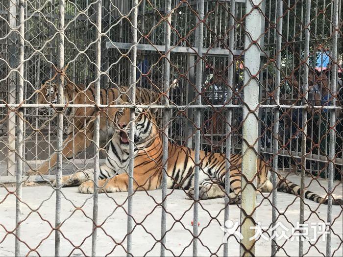 动物园-图片-邯郸周边游-大众点评网