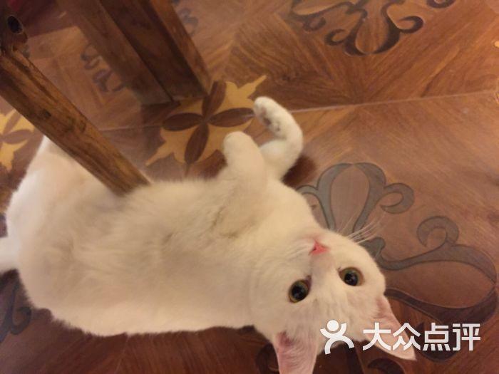 壁纸 动物 狗 狗狗 猫 猫咪 小猫 桌面 700_525