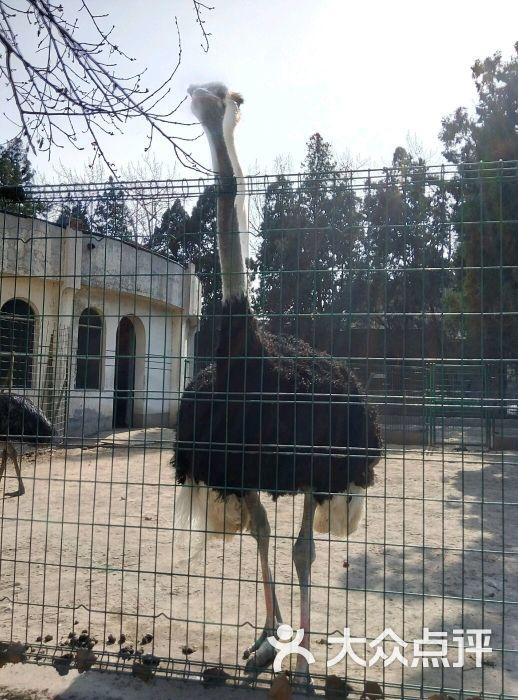 保定市动物园图片 - 第3张