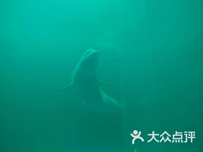 石林冰雪海洋世界-图片-石林彝族自治县周边游-大众