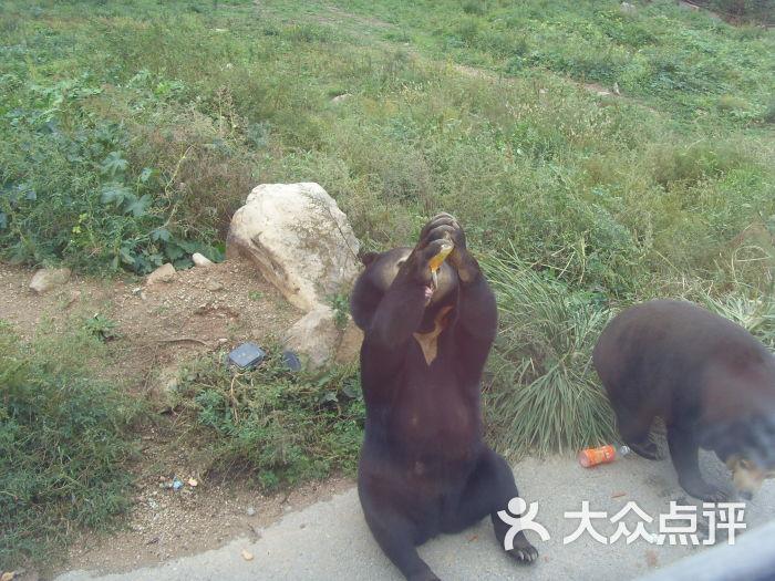 八达岭野生动物园的点评