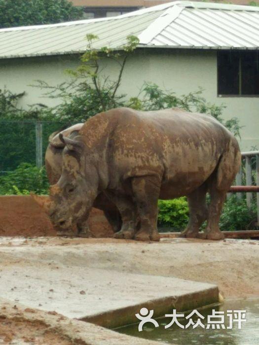 香市动物园的全部评价-东莞-大众点评网