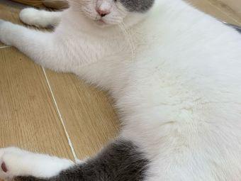 星漫猫舍撸猫