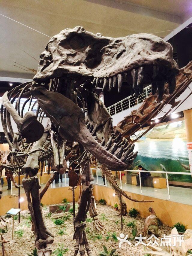 中国古动物馆图片 - 第5张