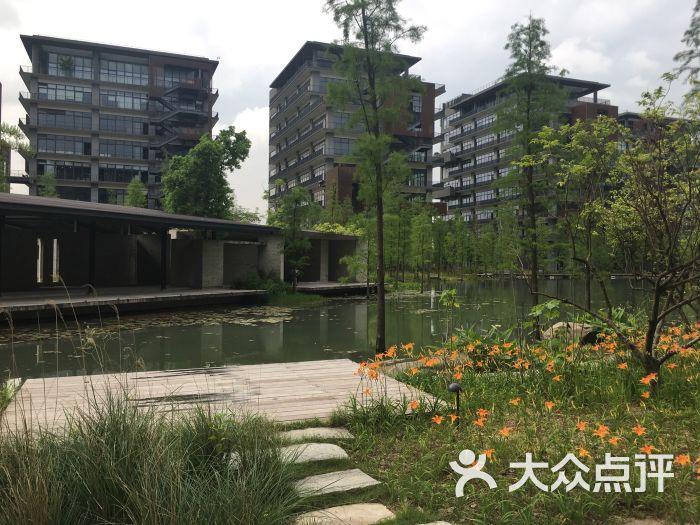 泰华梧桐岛-图片-深圳生活服务-大众点评网