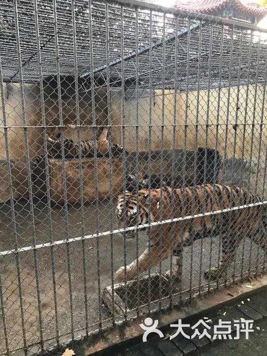 渭滨公园动物园图片 - 第16张