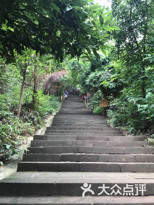 歌乐山国家森林公园-图片-重庆周边游-大众点评网