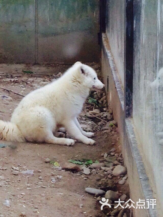 北京动物园狐狸图片 - 第913张