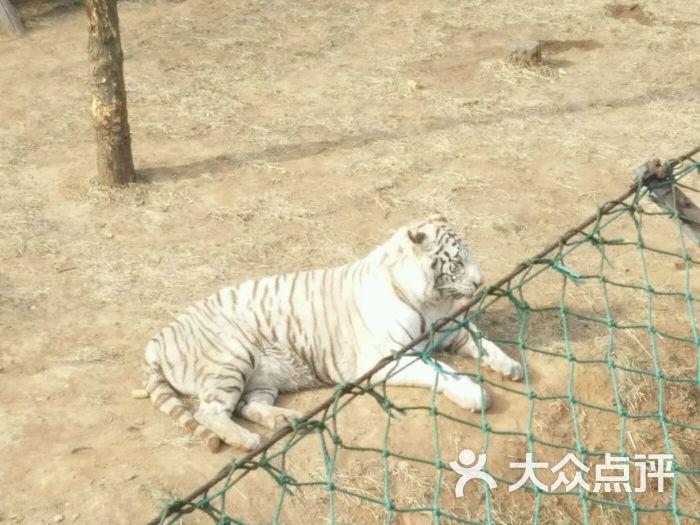 石家庄动物园海洋馆-图片-鹿泉区周边游-大众点评网
