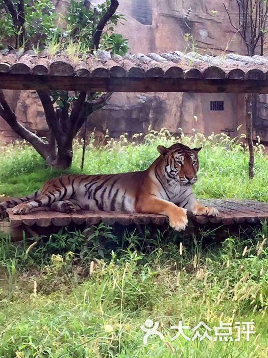 长沙生态动物园图片 - 第3张