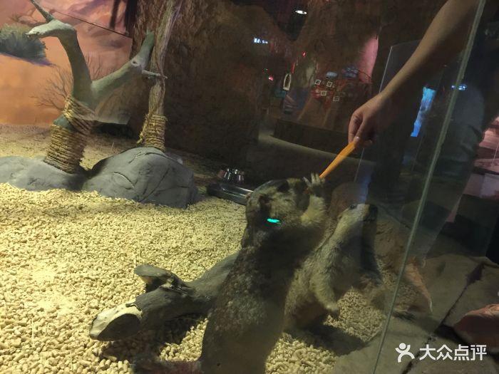 嗒咪动物奇幻乐园(杭州店)图片 - 第133张