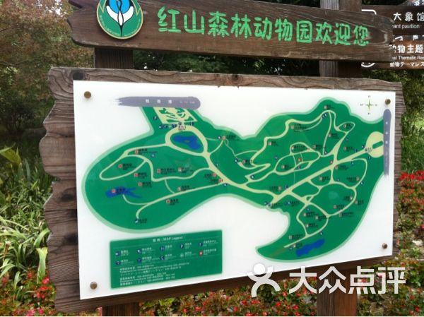 红山森林动物园地图图片 - 第8张