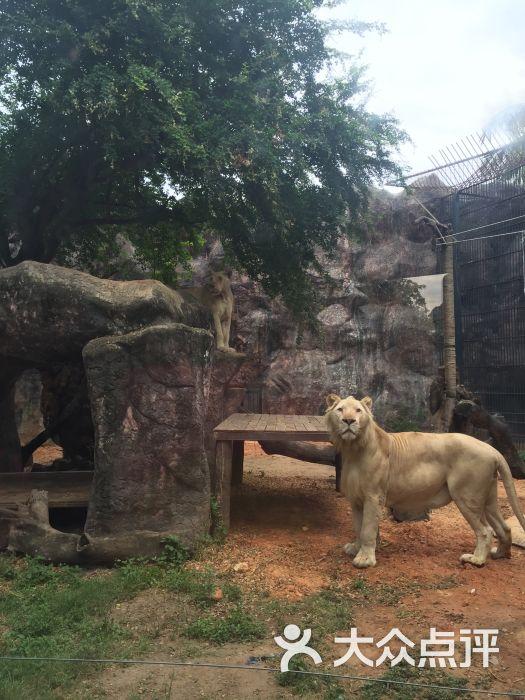 律实动物园图片 - 第5张