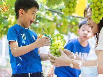 华阳生态农业葡萄园