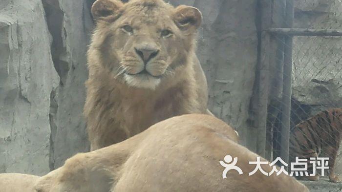 成都动物园的全部评价(第2页)-成都-大众点评网