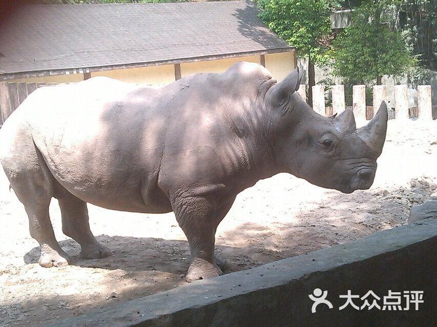 重庆动物园景点图片 - 第11张